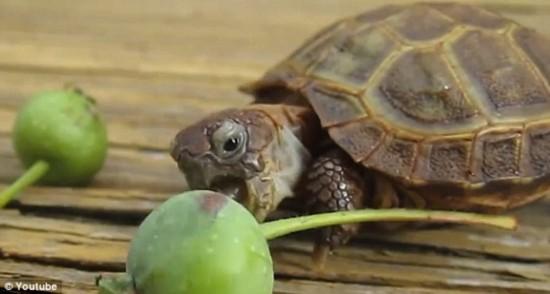 把小乌龟错认为十二生肖?传统教育得做实做细